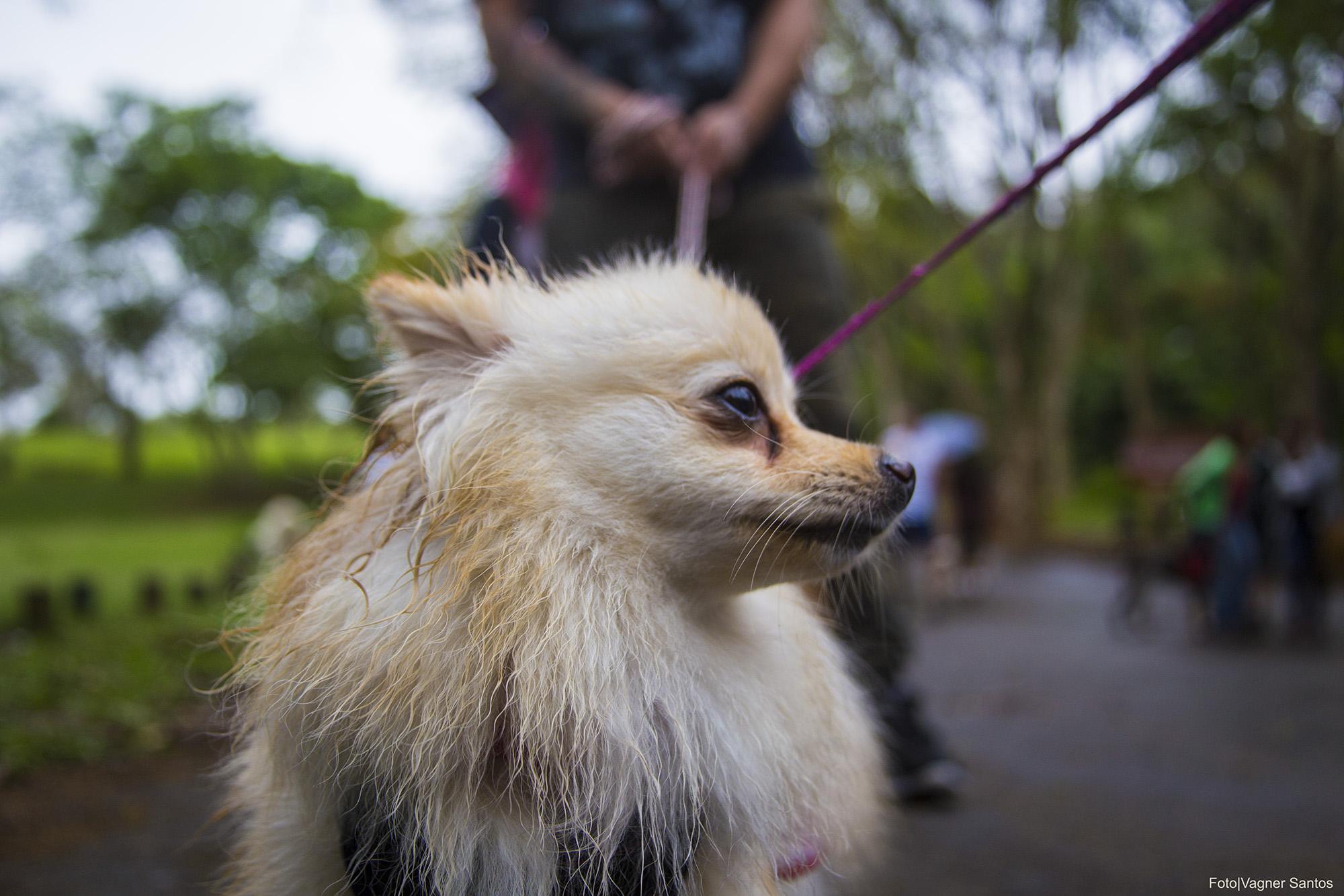 Prefeitura de Cotia retoma Campanha de Castração de Cães e Gatos
